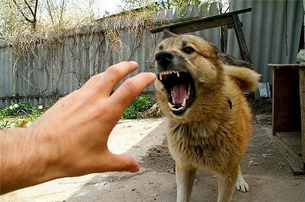 Перша допомога при укусах тварин