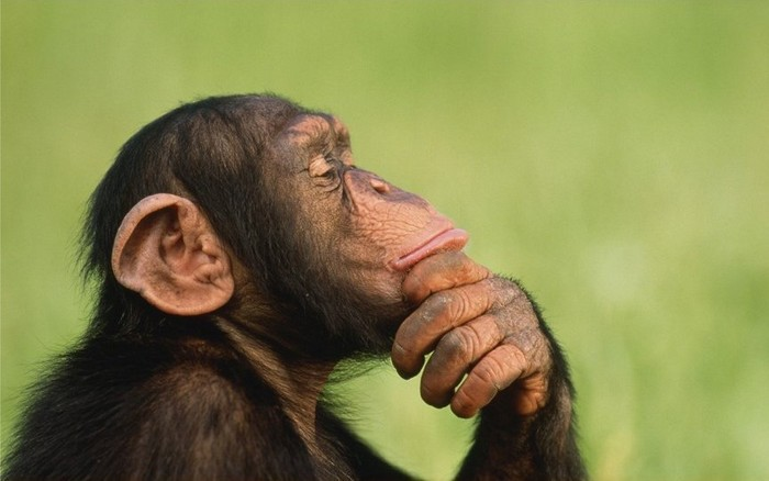 рік мавпи